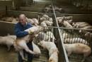 Porc irlandais: l'Irlande lance un avertissement international