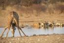 Au pays des superlatifs en Namibie