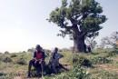 Le Sénégal : couleurs d'Afrique