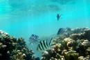 Dépaysement et chaleur humaine aux îles Fidji