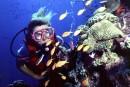 Dix belles destinations de plongée dans le Sud