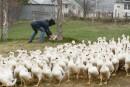 Rendez visite à un petit producteur de foie gras