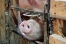Achetez votre charcuterie de celui qui a le cochon