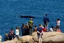 Admirer les baleines du littoral