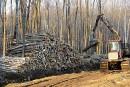 Une coupe d'arbres soulève la colère à Charlesbourg
