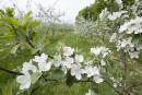 Le printemps dans la nature