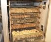 Les poussins naissent par dizaines dans un écloisoir. Les boules... | 6 avril 2012