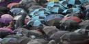Les parapluies étaient à l'honneur au stade olympique pour les... | 3 août 2012