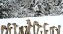 Des autruches au zoo de Kozishche en Biélorussie... | 24 janvier 2013