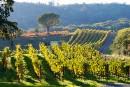 Napa Valley, poids lourd du vin américain