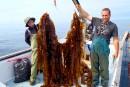 Le potentiel caché de l'algue de mer