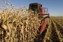Plus de 9000fois non au maïs sucrégénétiquement modifié