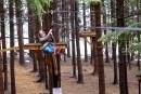 Les arbres comme terrain de jeu