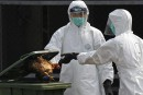 Nouvelles restrictions pour endiguer la grippe aviaire