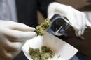 Marijuana: Santé Canada croule sous les demandes de permis