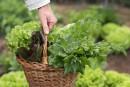 Le jardinage bon pour la santé