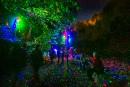 <em>Foresta Lumina</em> : une expérience éblouissante
