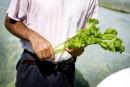 Des plants pour les graines, d'autres pour les feuilles