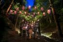 Foresta Lumina attire les foules