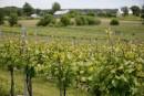 Vignoble Cortellino: un coin d'Italie en Montérégie