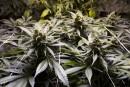 La légalisation de la marijuana attire davantage de sans-abri à Denver