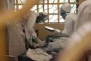 L'Ebola pourrait se propager «comme un feu de forêt»
