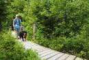 Courrier du globe-trotter: voyager au Québec avec son chien