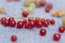 Groseilles: les grandes oubliées des petits fruits