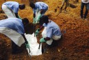 Ebola: le sérum du salut?