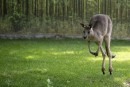 Il est possible de voir des kangourous, animal emblématique de... | 15 août 2014