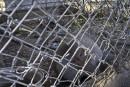 Les animaux de Gaza aussi dans la tourmente de la guerre