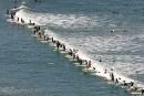 Le Cap: surfer pour échapper à la misère des ghettos