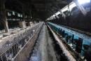 Un intrus libère 3000 visons d'une ferme en Montérégie