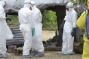Le virus Ebola en quatre temps