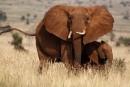 Deux fois moins d'animaux sauvages sur Terre qu'il y a 40 ans
