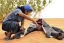 Maroc: à Merzouga, la mode est aux «bains de sable»