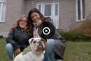 Québec dit non au médicament «miracle»de Laurie