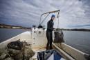 Pêcher les huîtres à la main