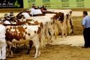 Foire agricole: Montmagny veut barrer la route à Expo Québec