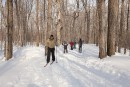 Ski de fond: six pistes, six styles