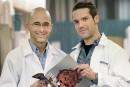 La vie secrète des plaquettes sanguines