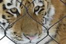 Saison hivernale record au Zoo de Granby