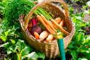 Longues listes d'attente pour les jardins communautaires à Québec