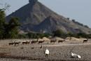 Une île en «arche de Noé», comme un anti-Dubaï