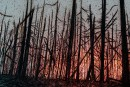 <em>Forêt noire</em>: la beauté sous les cendres