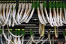 Un puissant outil de cyberespionnage lié aux États-Unis