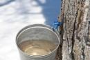 Deux chercheurs auraient trouvé la formule pour prévoir la production de sirop d'érable