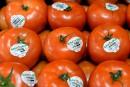 Serres Sagami achète le producteur de tomates Savoura