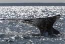 Une touriste canadienne est tuée par une baleine