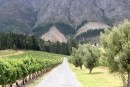 Cap sur les vignobles sud-africains